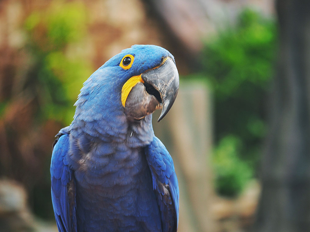 Photo of People say that parrots are the most beautiful birds in the flying in sky